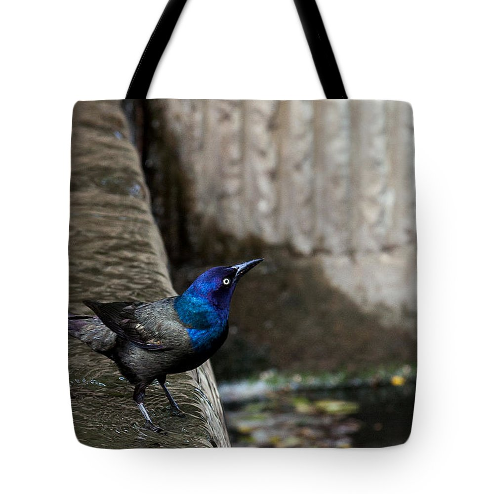 Common Gackle Tote Bag featuring the photograph Common Gackle by Sennie Pierson