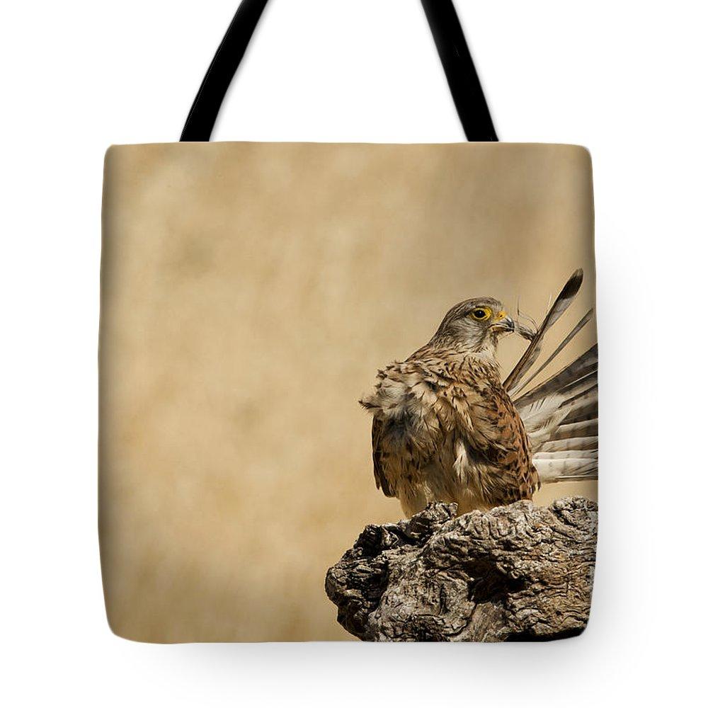 Common Kestrel Tote Bag featuring the photograph Common Kestrel Falco Tinnunculus by Eyal Bartov