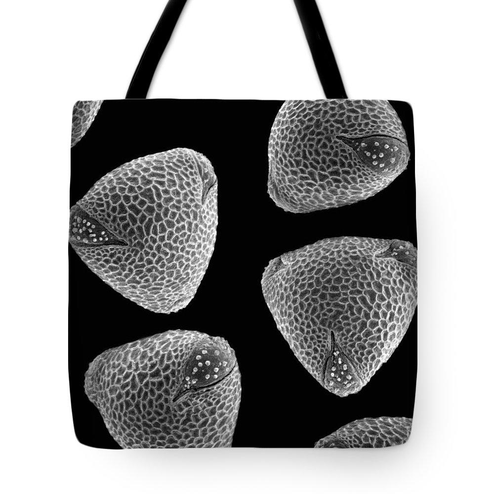 Black And White Tote Bag featuring the photograph Common Nasturtium Tropaeolum Majus Sem by Albert Lleal