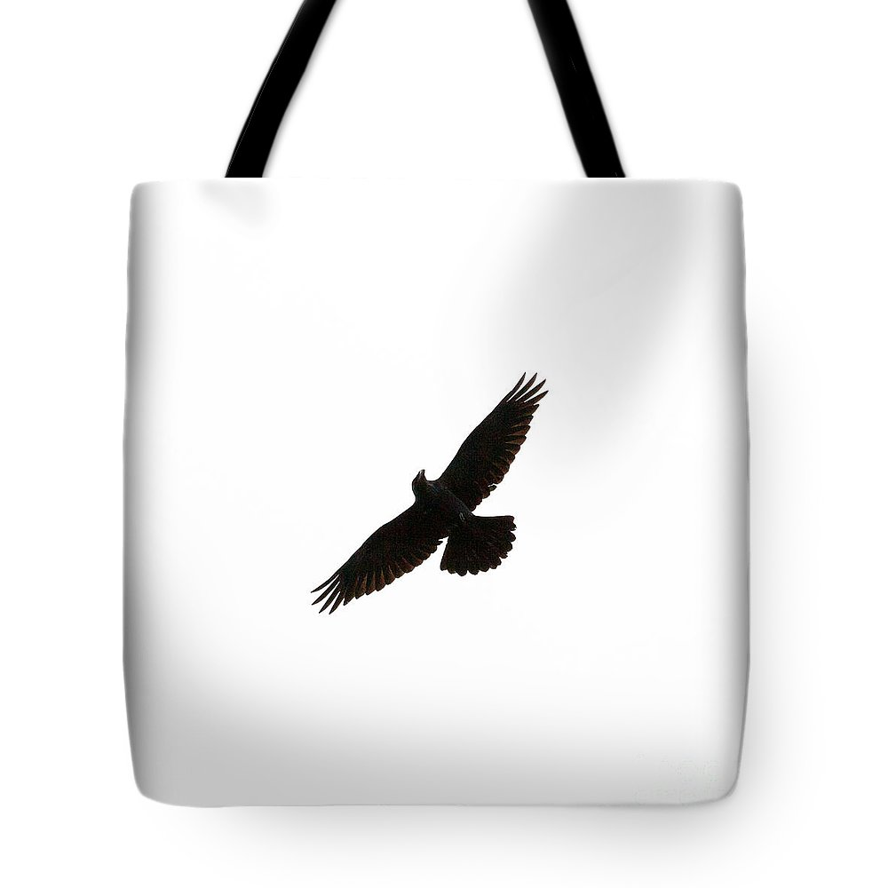 Animal Tote Bag featuring the photograph Common Raven Corvus Corax Flying Isolated On White by Stephan Pietzko