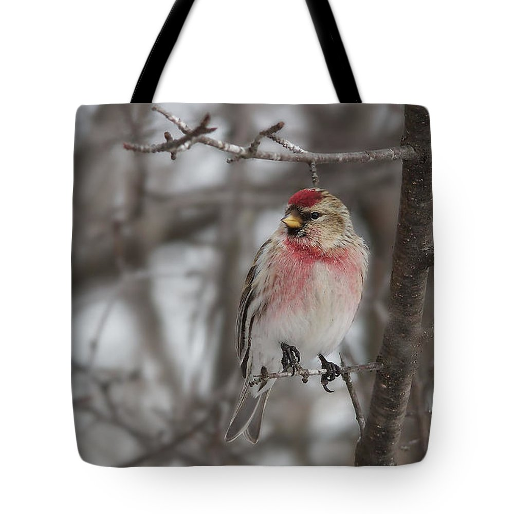 Common Redpoll Tote Bag featuring the photograph Common Redpoll - Sizerin Flamme - Acanthis Flammea by Nature and Wildlife Photography