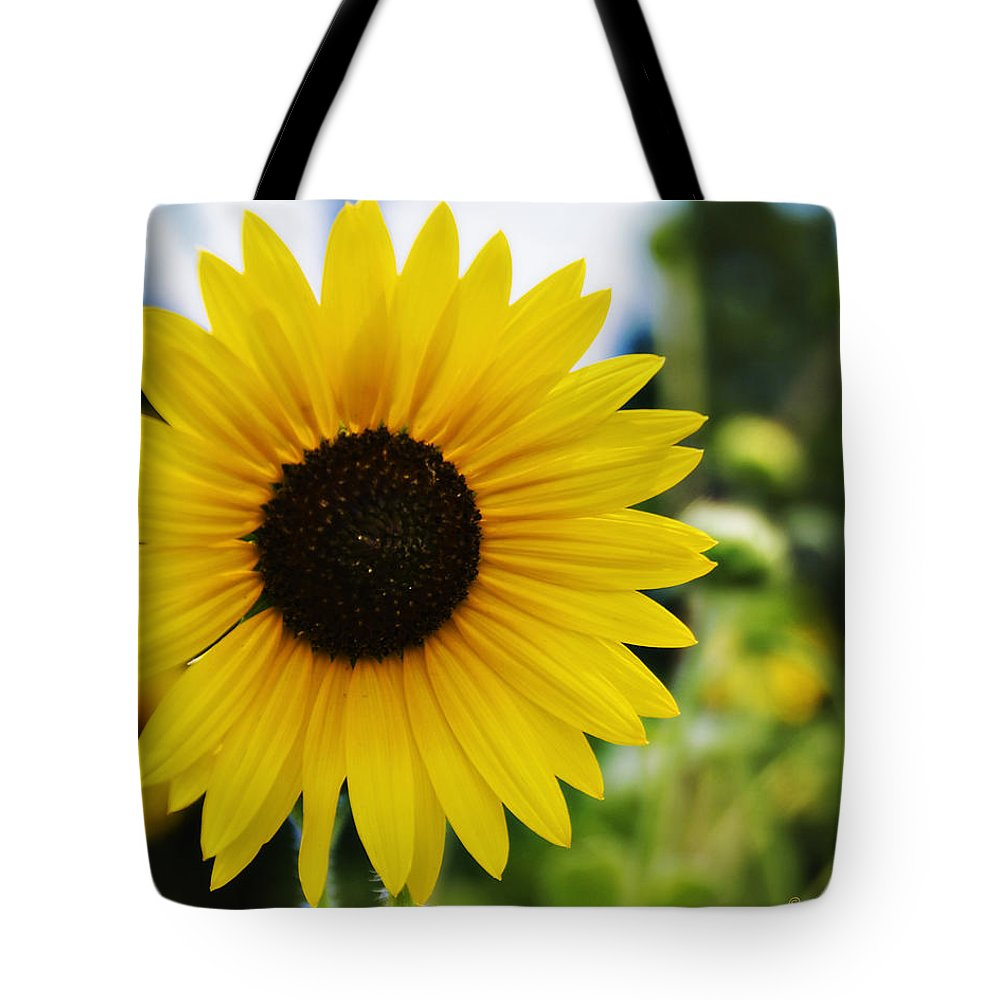 Kansas State Flower Tote Bag featuring the photograph Common Sunflower by Walter Herrit