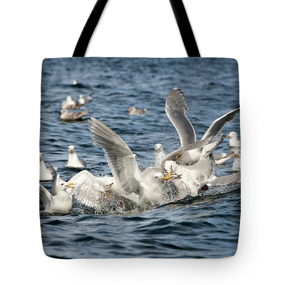 Gull Tote Bag featuring the photograph Competition by Ted Raynor