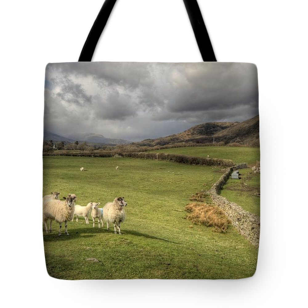 Lake Tote Bag featuring the photograph Coniston Sheep by Rob Hawkins