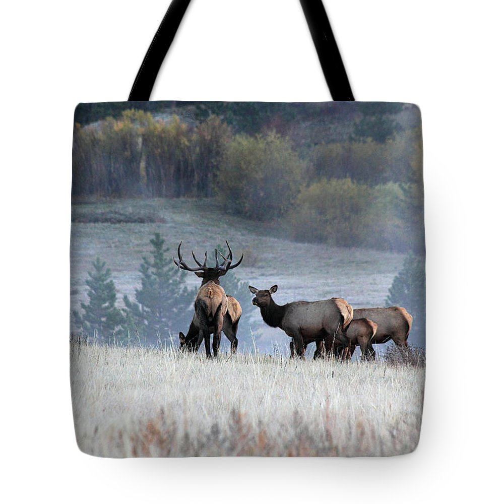 Elk Tote Bag featuring the photograph Cool Misty Morning by Shane Bechler