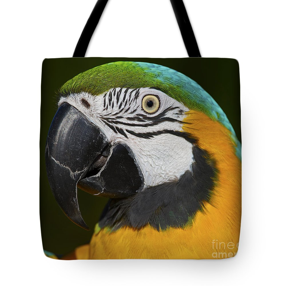 Nina Stavlund Tote Bag featuring the photograph Cooper... by Nina Stavlund