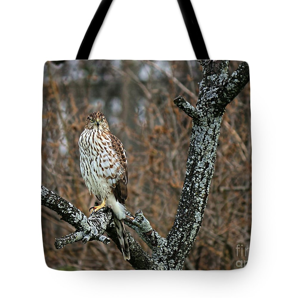 Cooper's Hawk Tote Bag featuring the photograph Coopers Hawk 0745 by Jack Schultz