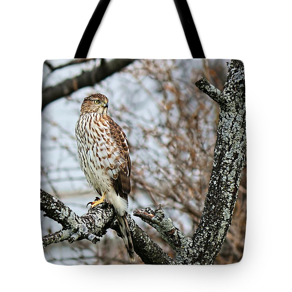 Cooper's Hawk Tote Bag featuring the photograph Coopers Hawk 0748 by Jack Schultz