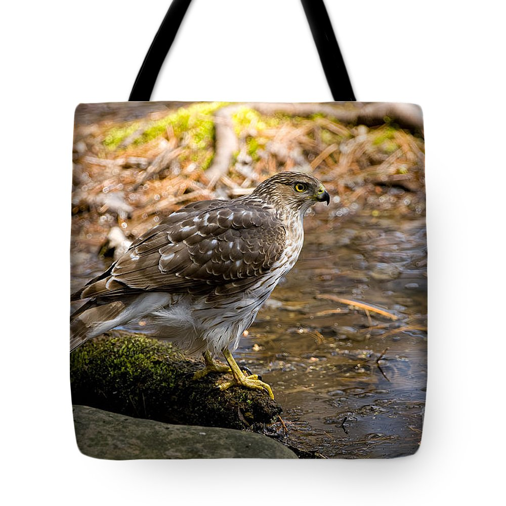 Cooper's Hawk Tote Bag featuring the photograph Coopers Hawk Pictures 61 by World Wildlife Photography
