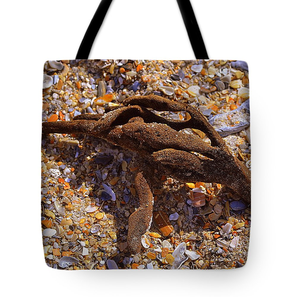 Coral Tote Bag featuring the photograph Coral Beach Treasure by Amy Lucid