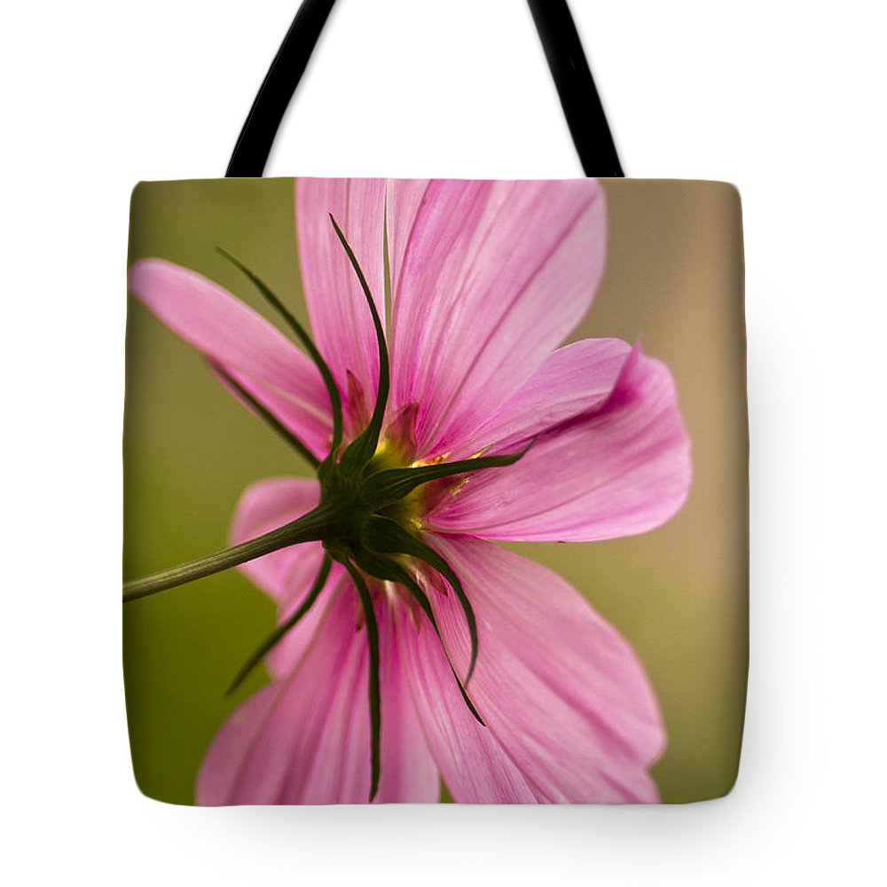 Cosmos Tote Bag featuring the photograph Cosmos In Pink by Diane Fifield