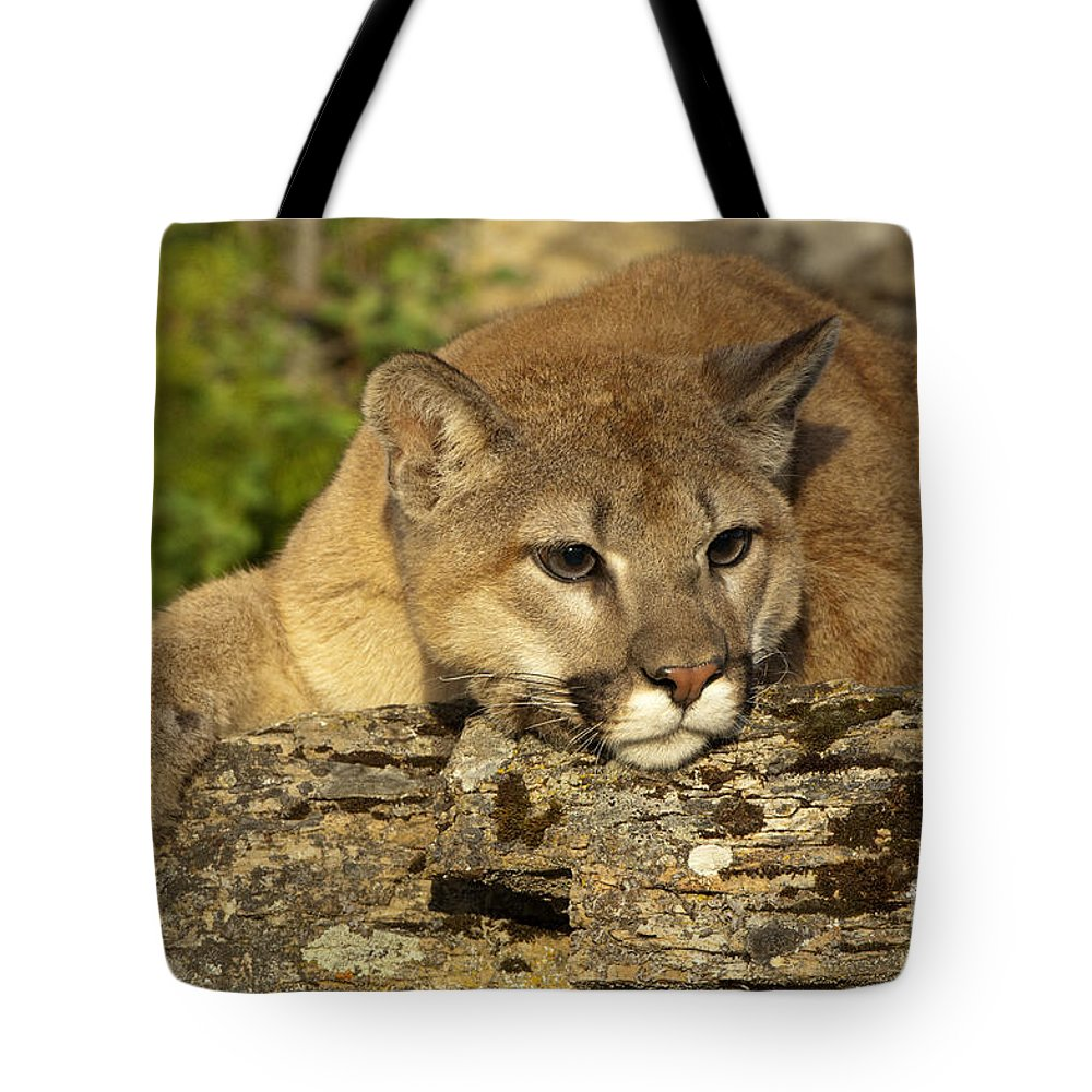 Cougar Tote Bag featuring the photograph Cougar On Lichen Rock by Sandra Bronstein