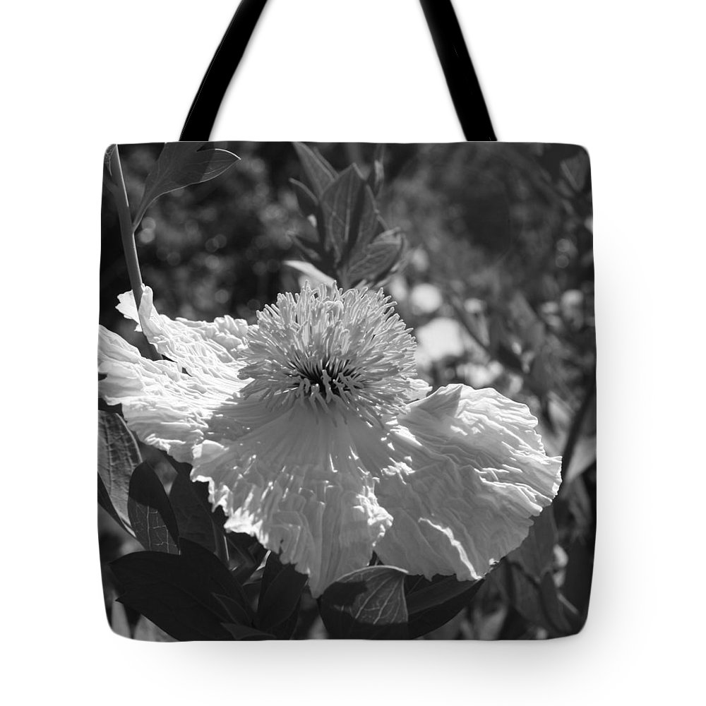 Coulters Matilija Poppies Tote Bag featuring the photograph Coulter's Matilija Poppy 2 by Ellen Henneke