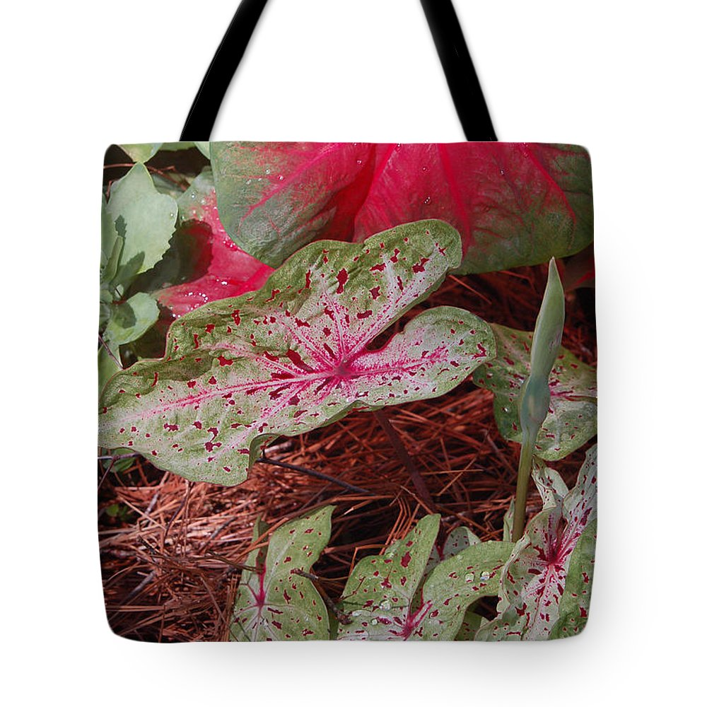 Caladium Tote Bag featuring the photograph Courtyard Caladium by Suzanne Gaff