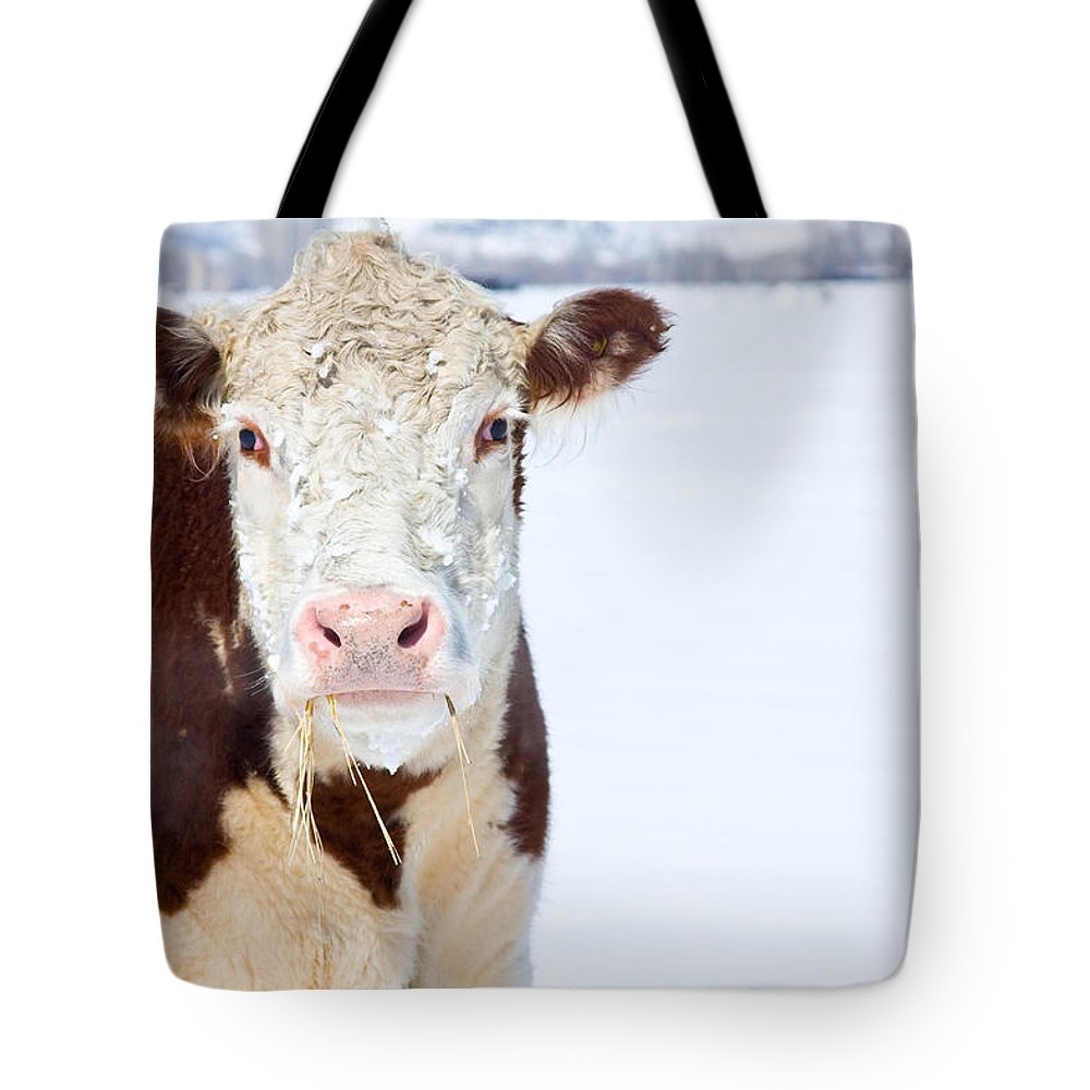 Cow Tote Bag featuring the photograph Cow - Fine Art Photography Print by James BO Insogna