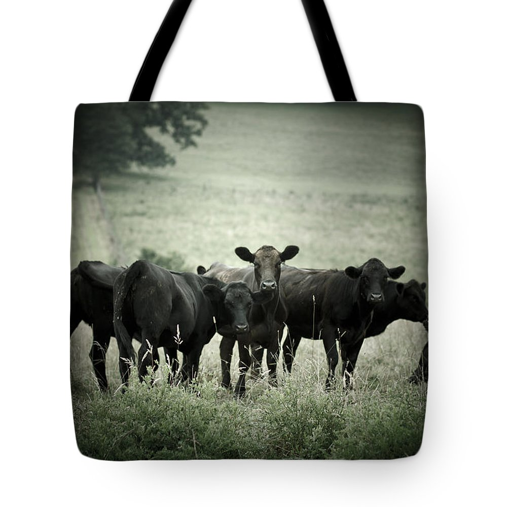 Cows Tote Bag featuring the photograph Cows by Shane Holsclaw