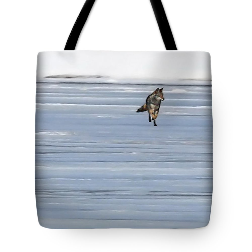 Coyote Tote Bag featuring the photograph Coyote Winter By Jim Figielski by Paulinskill River Photography