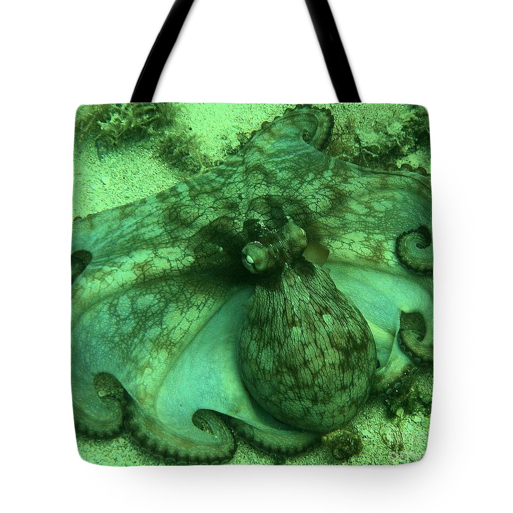 Common Octopus Tote Bag featuring the photograph Cozumel Octopus by Adam Jewell