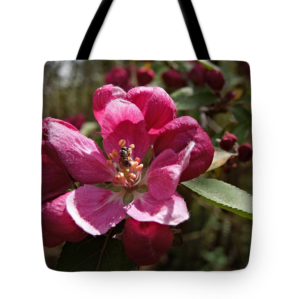 Macro Tote Bag featuring the photograph Crabapple Insect by Pete Trenholm