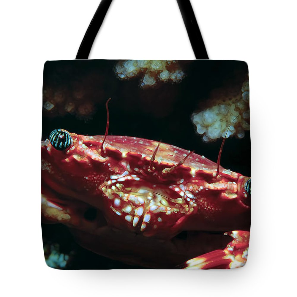 Hawaii Tote Bag featuring the photograph Crabs 1 by Dawn Eshelman
