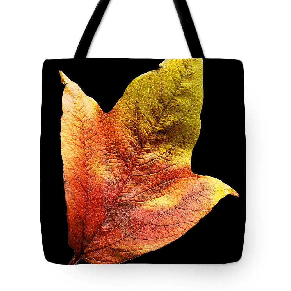 Leaf Tote Bag featuring the photograph Cranberry Tree Leaf Isolated On White by Donald Erickson