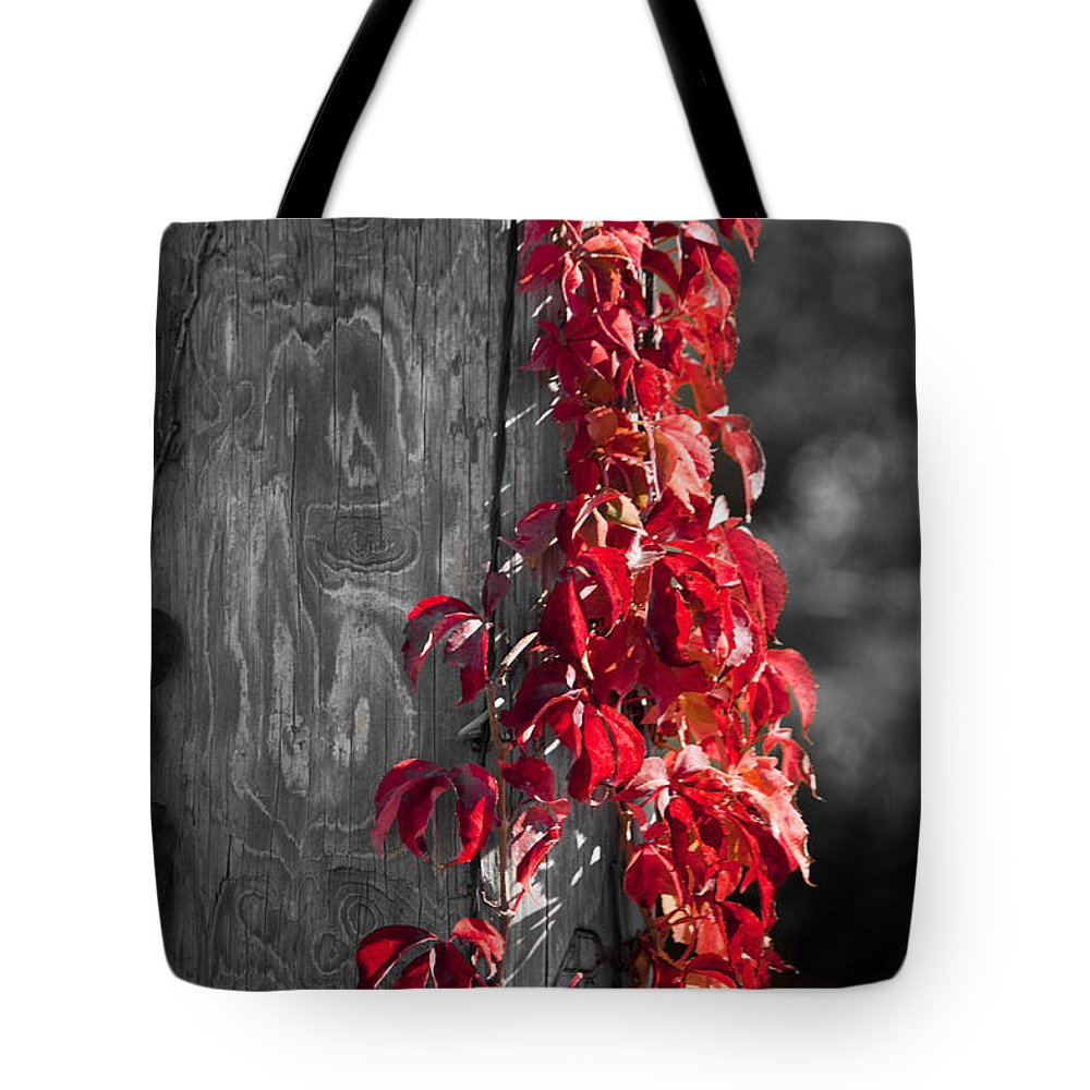 Virginia Creeper Tote Bag featuring the photograph Creeper On Pole Desaturated by Teresa Mucha