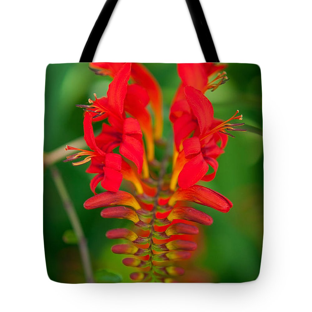 Crocosmia Close-up Photography Tote Bag featuring the photograph Crocosmia by Sabine Edrissi