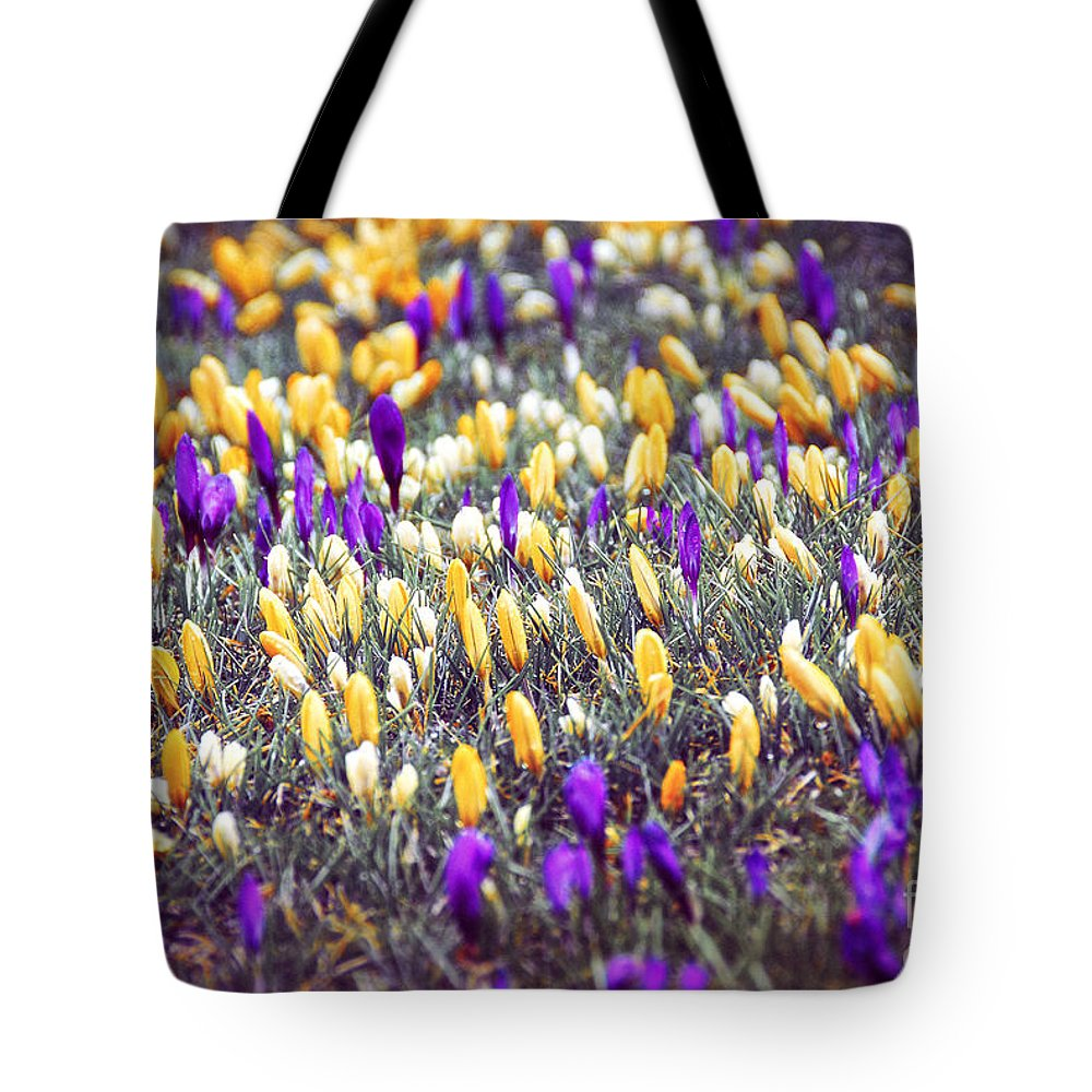 Crocus Tote Bag featuring the photograph Crocus Field by Elena Elisseeva