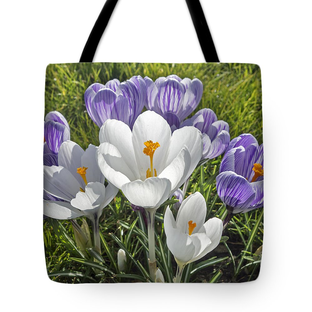 White Tote Bag featuring the photograph Crocuses by Arterra Picture Library