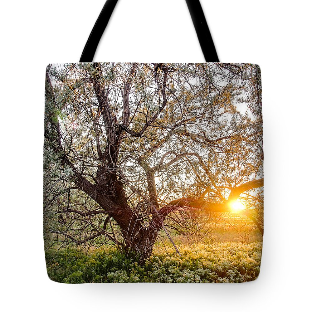Spring Tote Bag featuring the photograph Crooked by Emily Dickey