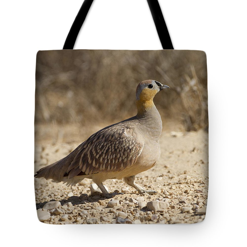 Crowned Sandgrouse Tote Bag featuring the photograph Crowned Sandgrouse Pterocles Coronatus by Eyal Bartov