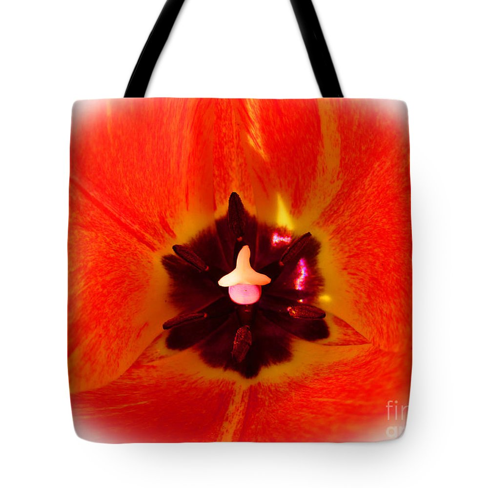 Tulips Tote Bag featuring the photograph Cultivar Orange Tulip by Tina M Wenger