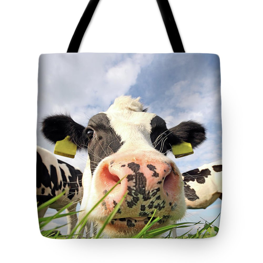 Grass Tote Bag featuring the photograph Curious Cow by Marcel Ter Bekke