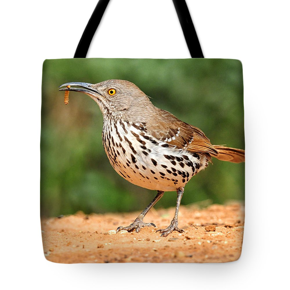 Curvedbill Thrasher Tote Bag featuring the photograph Curvedbill Thrasher With Grub by Dave Mills