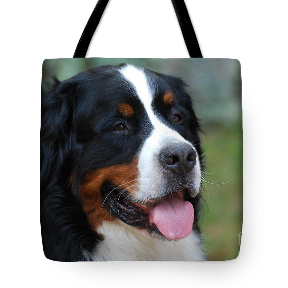 Bernese Mountain Dog Tote Bag featuring the photograph Cute Bernese Mountain Dog by DejaVu Designs