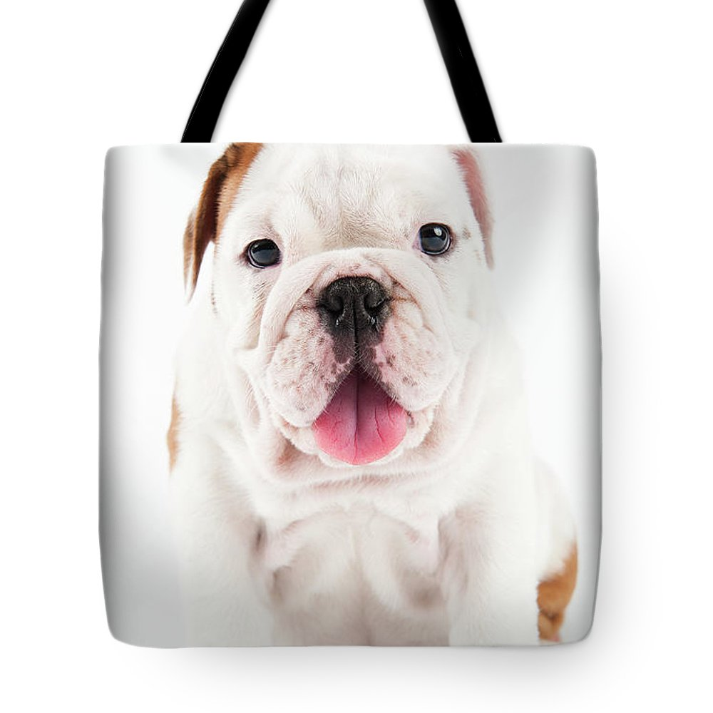 Pets Tote Bag featuring the photograph Cute Bulldog Puppy On White Background by Peter M. Fisher