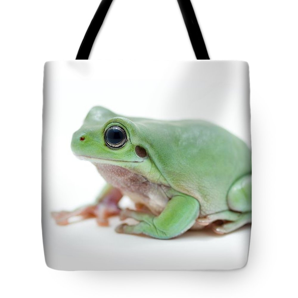 Alive Tote Bag featuring the photograph Cute Green Frog by Corey Hochachka