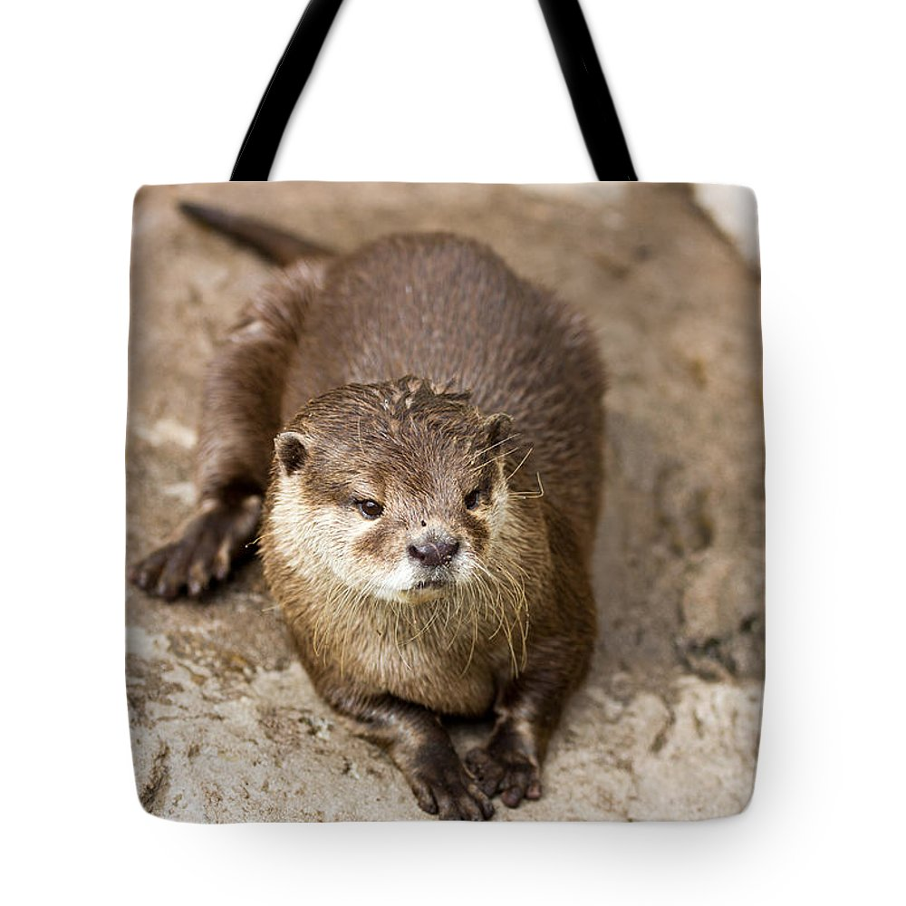 Otter Tote Bag featuring the photograph Cute Otter Portrait by Pati Photography
