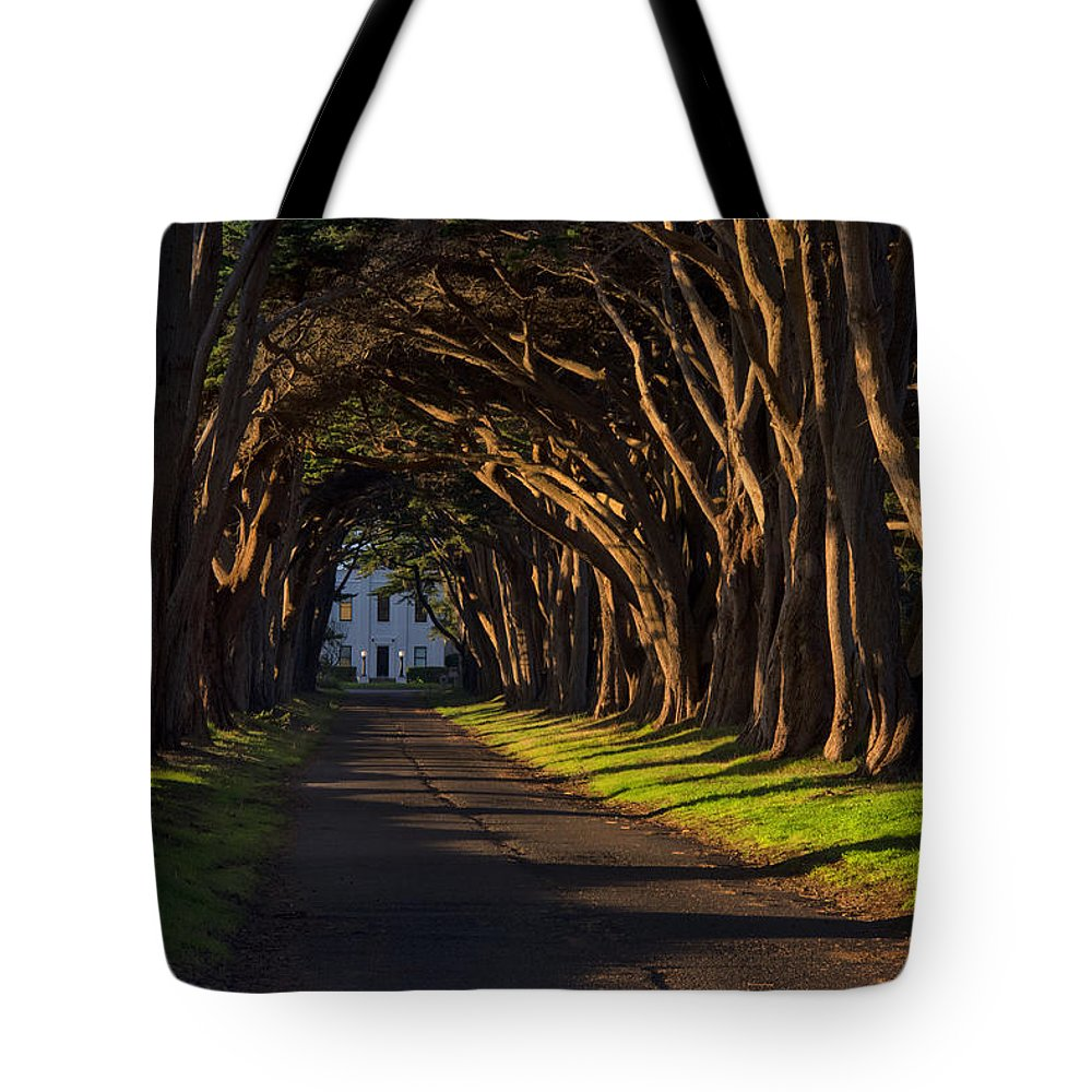 Point Reyes National Seashore Tote Bag featuring the photograph Cypress Tree Tunnel by Gej Jones