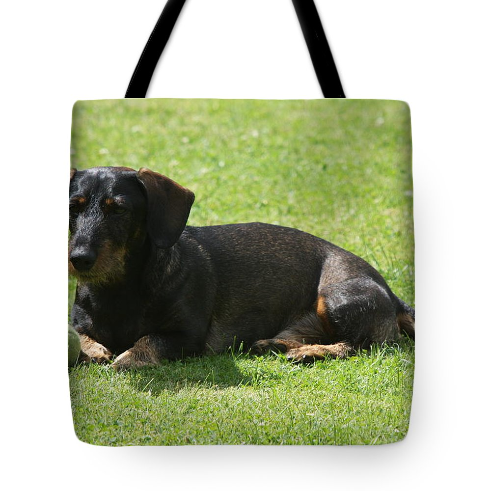 Dog Tote Bag featuring the photograph Dachshund Wants To Play by Christiane Schulze Art And Photography