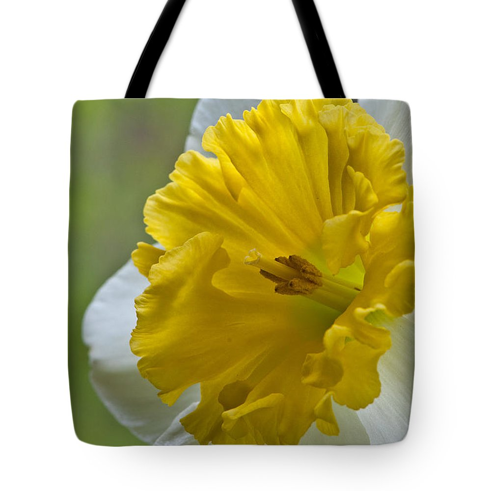 Daffodil Tote Bag featuring the photograph Daffodil by Randy Walton