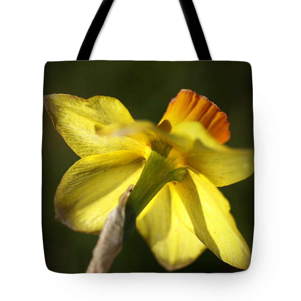 Daffodil Flower. Daffodil Tote Bag featuring the photograph Daffodils Grace by Joy Watson
