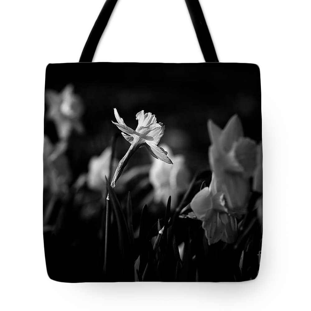Midwest America Tote Bag featuring the photograph Daffodils In Black And White by Frank J Casella
