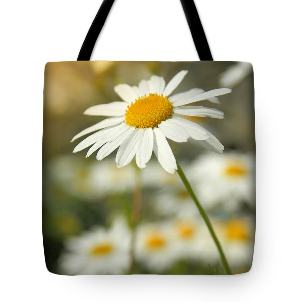 Daisy Tote Bag featuring the photograph Daisies ... Again - Original by Variance Collections