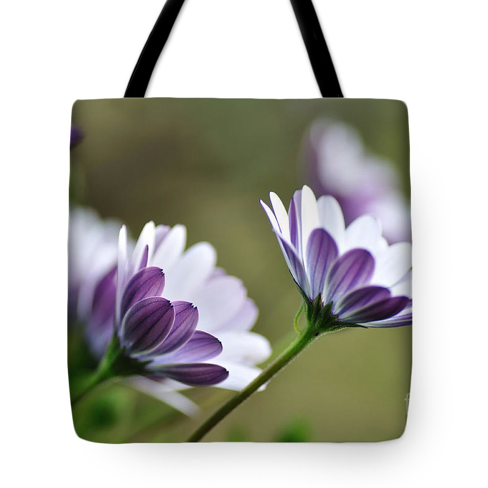 Photography Tote Bag featuring the photograph Daisies Seeking The Sunlight by Kaye Menner