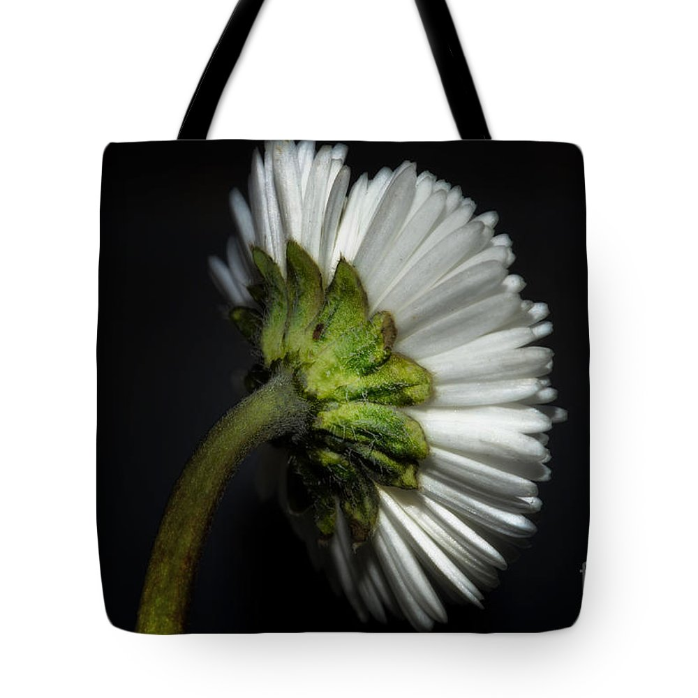 Flower Tote Bag featuring the photograph Daisy Flower by Mats Silvan