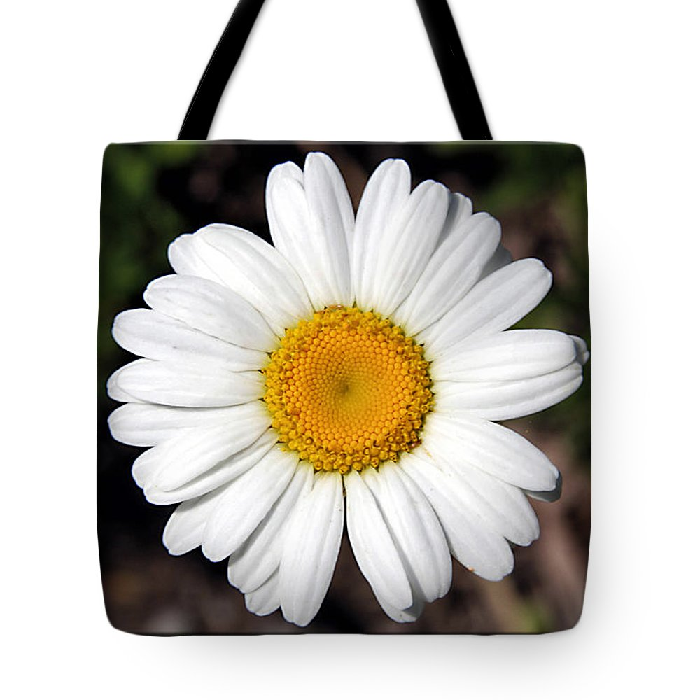 Flower Tote Bag featuring the photograph Daisy by Sharon Horn