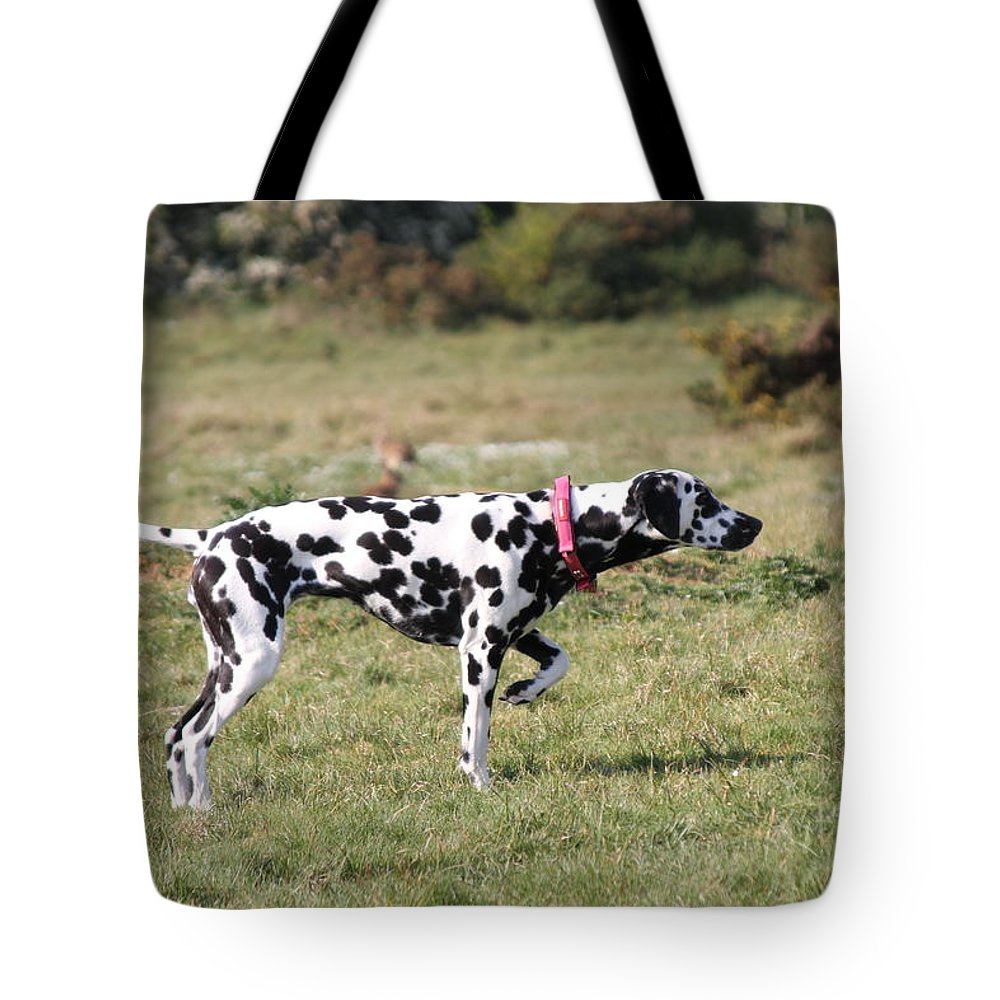 Dalmatian Pretending To Be A Pointer Tote Bag featuring the photograph Dalmation Pretending To Be A Pointer by Gordon Auld