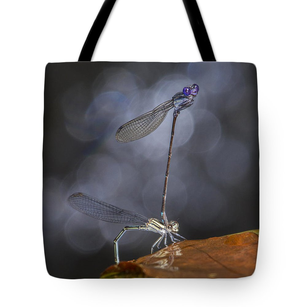 Damselfly Tote Bag featuring the photograph Damselflies Mating by Steven Schwartzman