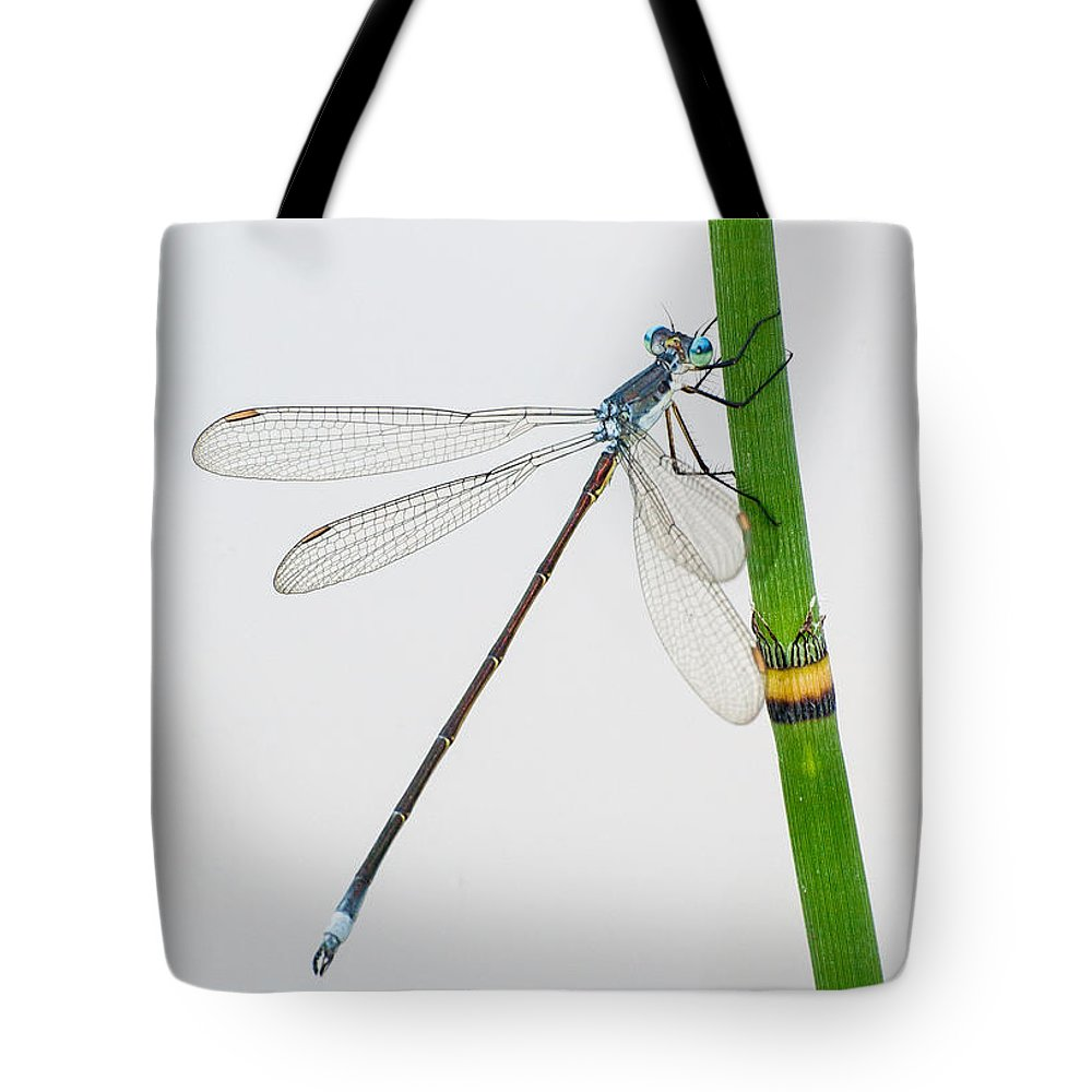 Equisetum Tote Bag featuring the photograph Damselfly On Horsetail by Jim Zablotny